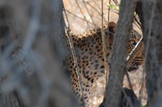 leopardclose